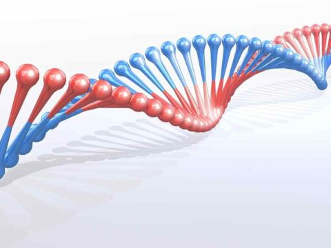 DNA Replication Step By Step Process