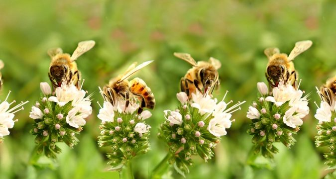 Amazing Facts About Bees