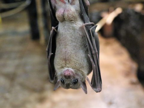 Amazing Facts About Bats