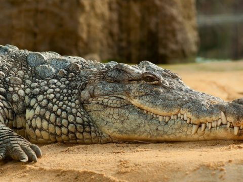 Amazing Facts About Crocodiles